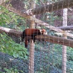 Photo taken at Binghamton Zoo at Ross Park by Marina K. on 8/29/2014