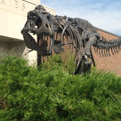 Photo taken at Museum of the Rockies by Marguerite A. on 7/3/2013