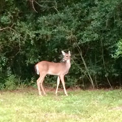 Photo taken at The Woodlands by Linda A. on 10/17/2014