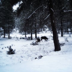 Photo taken at Grand Canyon National Park by Emma on 2/11/2013