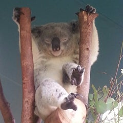 Photo taken at Australia Zoo by Daryl H. on 5/13/2013