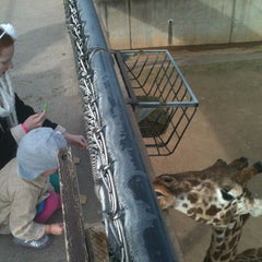 Photo taken at Abilene Zoo by Brandon Scott T. on 12/31/2012
