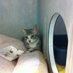 Photo taken at Animal Welfare League Of Arlington by Virginialicous on 12/8/2012