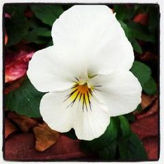 Photo taken at Atlanta Botanical Garden by Morgan K. on 11/19/2012