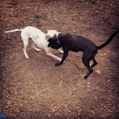 Photo taken at Piedmont Park Dog Park by Drew H. on 11/4/2012