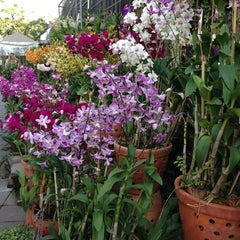 Photo taken at Siam Orchid Center (ศูนย์กล้วยไม้สยาม) by Bow M. on 1/10/2014