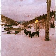 Photo taken at Stein Eriksen Lodge Deer Valley by Jennifer W. on 3/1/2013