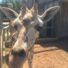 Photo taken at Zoo World by Brandi H. on 6/28/2014