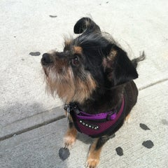 Photo taken at Doggie Styles by ericamichele h. on 7/14/2012