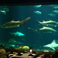 Photo taken at Sharks Underwater Grill by Jason S. on 5/26/2012