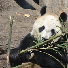 Photo taken at 上野動物園 (Ueno Zoo) by T A. on 11/25/2012
