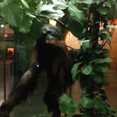 Photo taken at Hall Of Primates by Juan Camilo C. on 10/4/2012