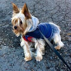 Photo taken at Alamo Square Dog Park by Jasmine W. on 12/31/2015