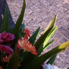 Photo taken at Floricultura Marina by Luzinha N. on 6/27/2012