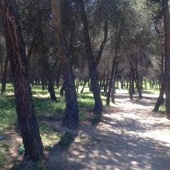 Photo taken at Pinar Conde de Orgaz by Miriam Elena S. on 5/3/2014