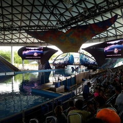 Photo taken at Shamu Theater by Robin P. on 7/14/2013