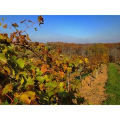 Photo taken at Elk Creek Vineyard by Melissa on 10/26/2014