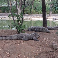Photo taken at Nehru Zoological Park by Edil B. on 1/3/2015