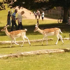 Photo taken at Knole Park by Jeremy F. on 7/13/2014