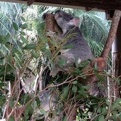 Photo taken at Australia Zoo by Betty W. on 6/8/2013