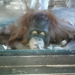Photo taken at Erie Zoo by Mary M. on 8/6/2012