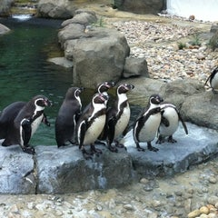 Photo taken at Calgary Zoo by Chris on 6/10/2012