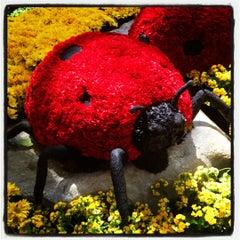 Photo taken at Bellagio Conservatory & Botanical Gardens by Heather on 7/3/2012