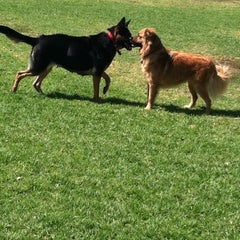 Photo taken at Sepulveda Basin Off-Leash Dog Park by Danny D. on 8/10/2011