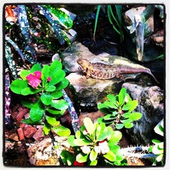 Photo taken at Reptile Gardens by HEATHER K. on 7/23/2012