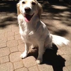 Photo taken at Peter Detmold Park Dog Run by Ann T. on 6/16/2012