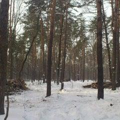 Photo taken at Ліс by Вячеслав Б. on 2/18/2012