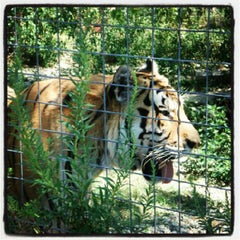 Photo taken at Exotic Feline Rescue Center by Gio P. on 8/23/2012