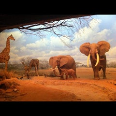 Photo taken at Natural History Museum of Los Angeles County by Tara 🐒 C. on 3/10/2012