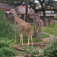 Photo taken at Giraffe House by Tiffanie W. on 9/3/2011