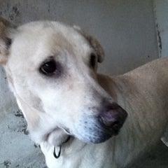 Photo taken at Town Lake Animal Shelter by Jody J. on 12/10/2011