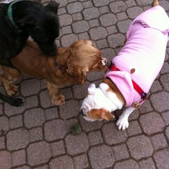 Photo taken at Peter Detmold Park Dog Run by Lana C. on 1/8/2011