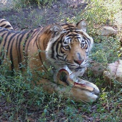 Photo taken at Carolina Tiger Rescue by Kellei on 11/15/2011
