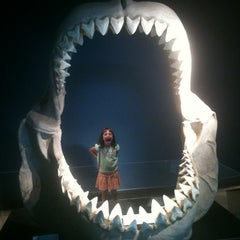 Photo taken at Museum of Nature & Science by Mike T. on 9/3/2012