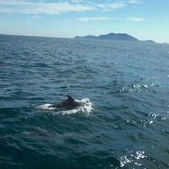 Foto tirada no(a) Ilha do Arvoredo por Carlos C. em 3/1/2012
