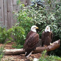 Photo taken at National Aviary by Brendan S. on 6/2/2012