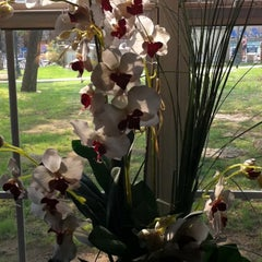 Photo taken at Tanglewood Tranquility Spa by Janice G. on 4/23/2011