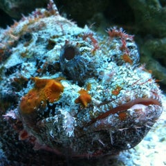 Photo taken at Mote Marine Laboratory & Aquarium by Ruth L. on 5/26/2012