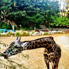 Photo taken at Los Angeles Zoo and Botanical Gardens by Cassie on 6/17/2012