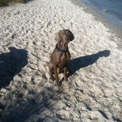 Photo taken at Davis Island Dog Park by Anna P. on 2/14/2012