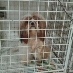 Photo taken at Pet Shop York News by Otsuka S. on 7/13/2012