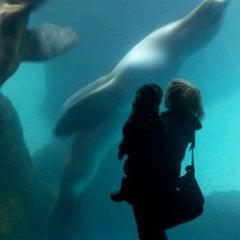 Photo taken at Oregon Zoo by Kris K. on 11/23/2011