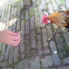 Photo taken at Kinderboerderij Molenwei by Rene K. on 8/3/2012