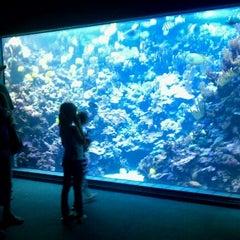Photo taken at Maui Ocean Center, The Hawaiian Aquarium by Ryan M. on 3/9/2011