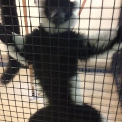 Photo taken at Duke Lemur Center by Jonny F. on 8/18/2012