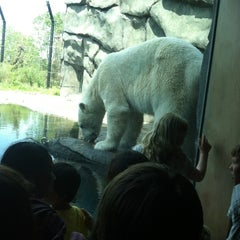 Photo taken at Polar Bear Odyssey At Como Park by Chaz A. on 5/13/2012